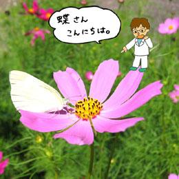 犀川のほとりで見つけました。花を見ると心がやすらぐなぁ。
